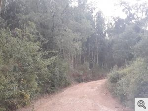 ruadoribeiro agagos 11