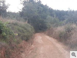 ruadoribeiro agagos 4