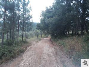 ruadoribeiro agagos 7