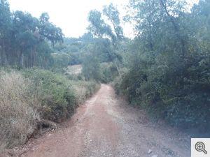 ruadoribeiro agagos 8