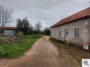 ruadomoleiro 2