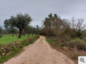 ruadomoleiro 3